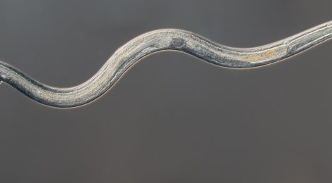 New Nature Paper on Soil Nematodes Globally